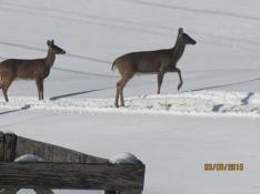 Deer 2SnowDam BEST Mar2015