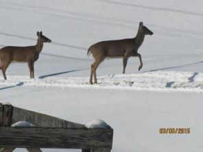 Deer 2SnowDam BEST Mar2015