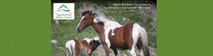 Appilachian Horse Center Photo.jpg