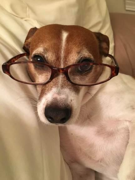 dog-in-glasses-macintyre